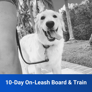 On Leash Board and Train